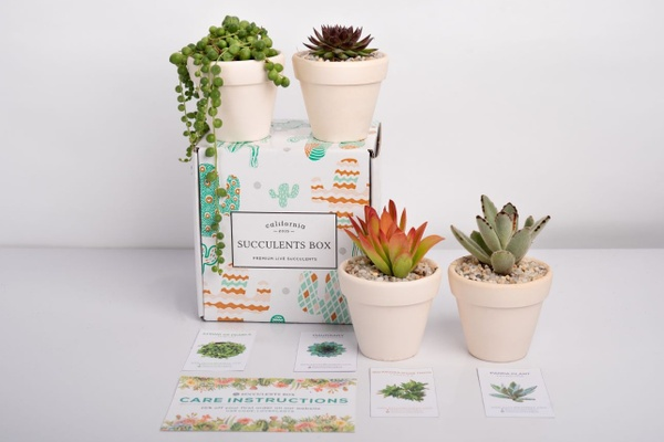 Succulents Box - Monthly Subscription Box Photo 1