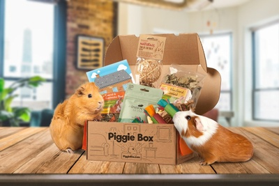 Piggie Box Photo 1