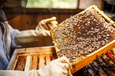 The Real Honey is Here Photo 3