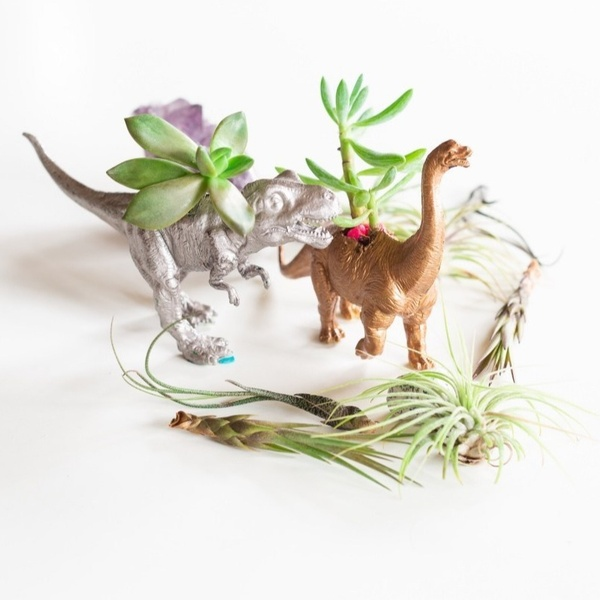January - Gilded Dinosaur Planters with Air Plants & Succulents