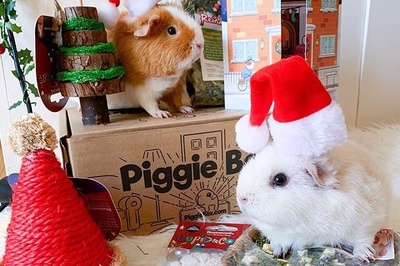 Piggie Box Photo 3