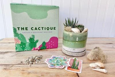 The Cactique