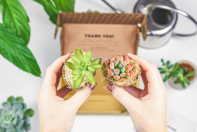 Monthly Succulent Studios Subscription Box Photo 3